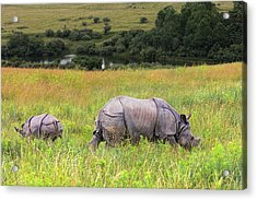 Mother And Baby Rhinos Acrylic Print
