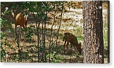 Mother And Fawn Acrylic Print by Tammy Sutherland