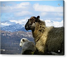 Mother And Lamb Acrylic Print by RKAB Works