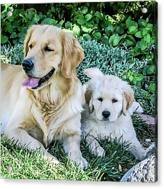 Mother And Pup Acrylic Print