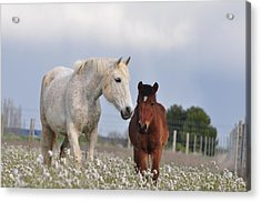 Mother And Son Acrylic Print by By Ana_gr