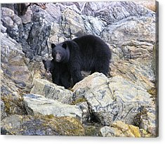 Mother Bear And Her Cub Acrylic Print