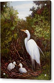 Mother Egret And Nestlings Acrylic Print