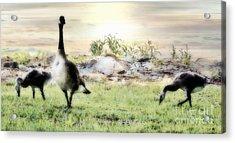 Mother Goose Acrylic Print by Anita Faye
