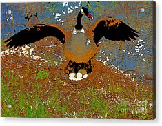 Mother Goose Guards Nest Acrylic Print by Chris  Taggart