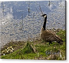Mother Goose Acrylic Print by Kate Lynch