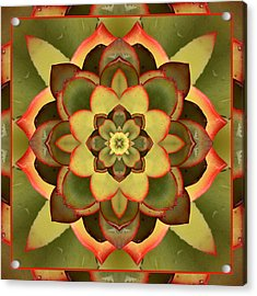 Mother Lotus Acrylic Print by Bell And Todd
