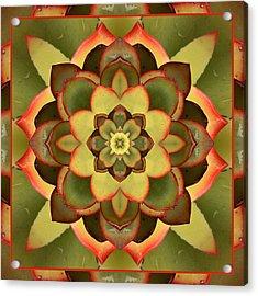 Mother Lotus Acrylic Print
