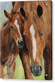 Mother Love Acrylic Print by David Stribbling