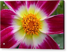 Mother Nature's Masterpiece Acrylic Print by Pierre Leclerc Photography