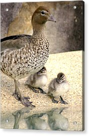 Mother Of Twins Acrylic Print by Holly Kempe