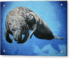 Mother Sea Cow With Calf Acrylic Print