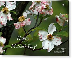 Acrylic Print featuring the photograph Mother's Day Dogwood by Douglas Stucky