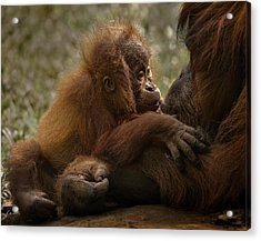Mother's Love Acrylic Print by C.s.tjandra