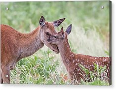 Mothers Love Acrylic Print