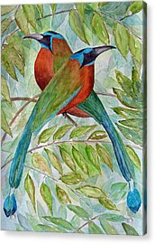 Motmots Acrylic Print by Patricia Beebe