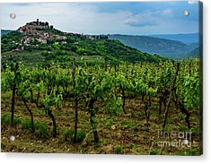 Motovun And Vineyards - Istrian Hill Town, Croatia Acrylic Print