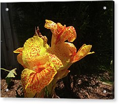 Mottled Canna Lilly Acrylic Print by Wayne Skeen
