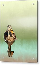 Mottled Duck Reflection Acrylic Print