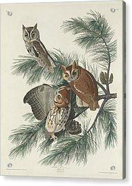 Mottled Owl Acrylic Print by Rob Dreyer