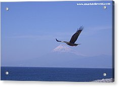 Mount Fuji With Eagle Acrylic Print by Mark Lelieveld