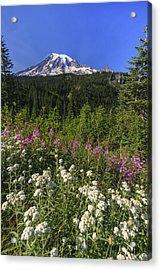 Mount Rainier Acrylic Print by Adam Romanowicz