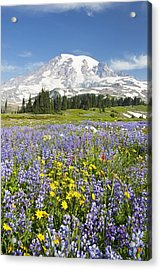 Mount Rainier National Park Acrylic Print by Craig Tuttle