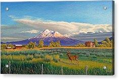 Mount Shasta Acrylic Print by Paul Krapf