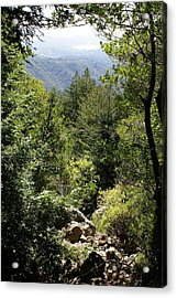 Mount Tamalpais Forest View Acrylic Print by Ben Upham III