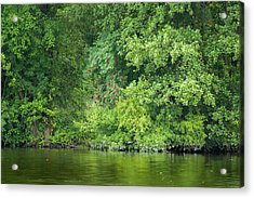 Acrylic Print featuring the photograph Mountain Ash With Berries by Alexander Kunz