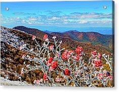 Mountain Ashe Acrylic Print