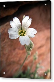 Acrylic Print featuring the photograph Mountain Beauty by RC DeWinter