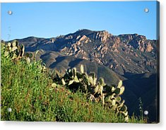 Acrylic Print featuring the photograph Mountain Cactus View - Santa Monica Mountains by Matt Harang
