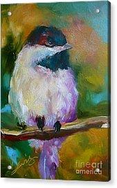 Mountain Chickadee Acrylic Print by Xx X