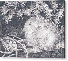 Mountain Cottontail Acrylic Print
