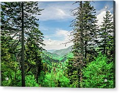 Mountain Forest Acrylic Print