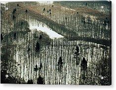 Mountain Forest Acrylic Print