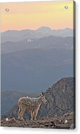Acrylic Print featuring the photograph Mountain Goat Sunset by Scott Mahon