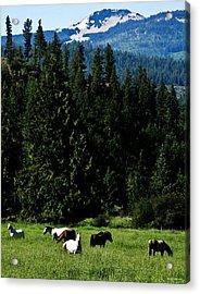 Mountain Herd Acrylic Print