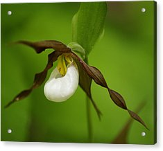 Acrylic Print featuring the photograph Mountain Lady's Slipper by Ben Upham III