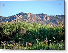 Acrylic Print featuring the photograph Mountain Landscape View - Purple Flowers by Matt Harang