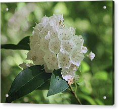 Acrylic Print featuring the photograph Mountain Laurel - Spring by Nikolyn McDonald
