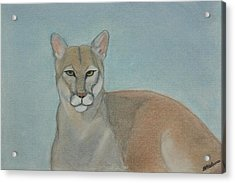 Mountain Lion - Pastels - Color - 8x12 Acrylic Print by B Nelson