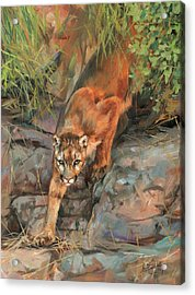Acrylic Print featuring the painting Mountain Lion 2 by David Stribbling
