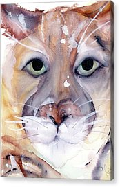 Acrylic Print featuring the painting Mountain Lion by Dawn Derman
