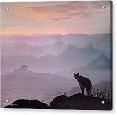 Mountain Lion Acrylic Print by Tim Fitzharris