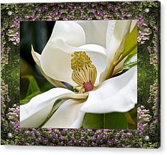 Acrylic Print featuring the photograph Mountain Magnolia by Bell And Todd