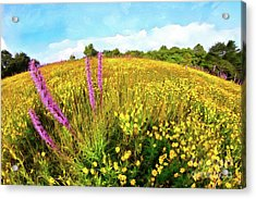 Acrylic Print featuring the painting Mountain Of Summer Flowers In The Blue Ridge Ap by Dan Carmichael