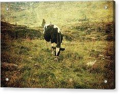 Mountain Pastures  Acrylic Print