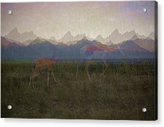 Mountain Pronghorns Acrylic Print